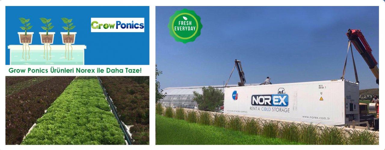 Grow Ponics Topraksız Tarım Teknolojisi ile Üretilen Ürünler  Norex ile Daha Taze