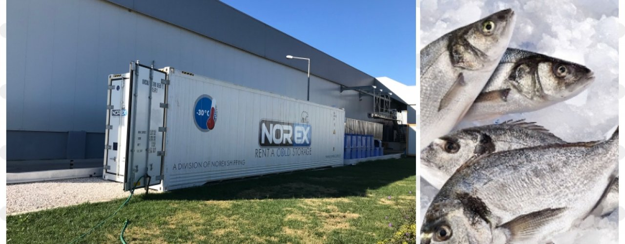 Balık Üreticisi ve İhracatçısı Müşterimiz Ek Soğuk Hava Depo İhtiyacını Norex ile Çözdü