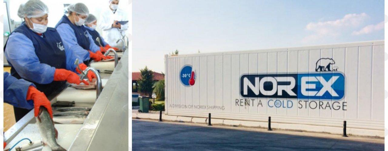 Lider Balık İşleme Tesisi Norex Soğuk Hava Depo konteynerini Uzun Dönem Kiraladı.